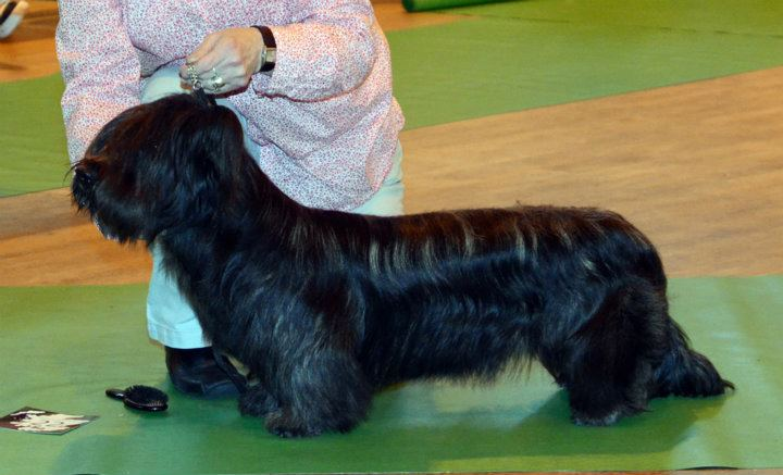 Bhuidh Here Be Dragons (1st in Minor Puppy & Puppy Dog)